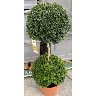 Duo Buxus Ball Stand. 12 Ltr