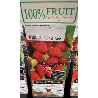 Rubus Willamette 2 Ltr - Raspberry