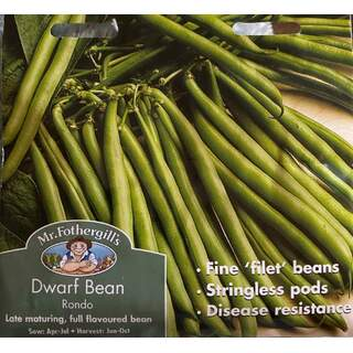 UK/FO-DWARF FRENCH BEAN Rondo