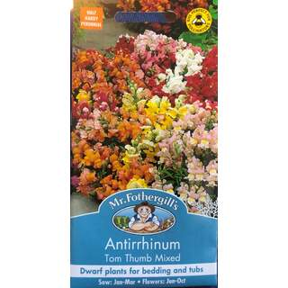 UK/FO-ANTIRRHINUM Tom Thumb Mixed
