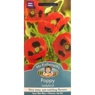 UK/FO-POPPY Ladybird