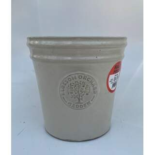 20cm Blossom Cone - Cream
