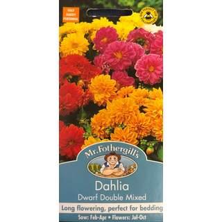 Dahlia Dwarf Double Mixed