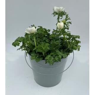 Mint Zinc Pail - 23cm (White Anemone)