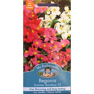 UK/FO-BEGONIA Summer Rainbow