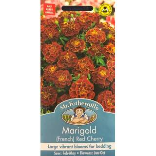UK/FO-MARIGOLD (French) Red Cherry