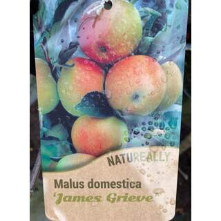 Malus d.  James Grieve  Apple