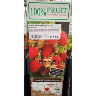 Rubus Malling Promise 2 Ltr - Raspberry