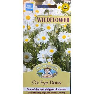 UK/FO-WF Ox Eye Daisy