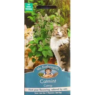 Catmint Catnip