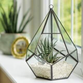 Grow It Glass Teardrop Terrarium