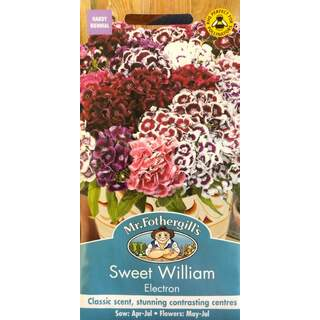 UK/FO-SWEET WILLIAM Electron